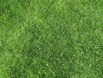 Grass. Field of freshly cut green grass Stock Photo