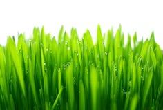 Free Grass Stock Photos - 4755373