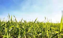Grass 5. A grassland and the sky Royalty Free Stock Photos