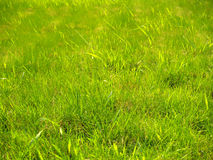 Grass. Green grass and the blue sky Stock Photo