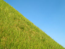 Grass. Green grass and the blue sky Royalty Free Stock Photo