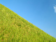 Grass. Green grass and the blue sky Stock Photography