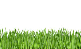 Free Grass Stock Images - 5066404