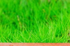 Grass. The green  grass in a garden of beijing Stock Photo