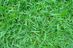 Grass. Green grass, shot taken in the garden of my house Royalty Free Stock Photography
