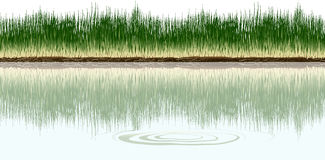 Grass. A grassy shore on the side of a lake Royalty Free Stock Photo