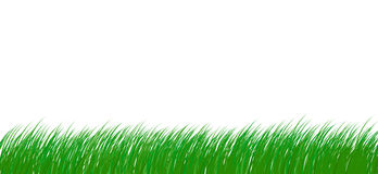 Grass. Fresh green grass. Isolated on white background path royalty free illustration