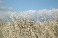Grass. On dune Royalty Free Stock Photography