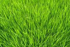 Grass. Forming a carpet of greens royalty free stock photos