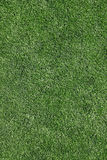 Grass. Perfectly cut grass background - large XXL file stock image
