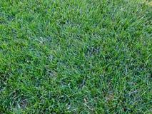 Grass2 Στοκ Φωτογραφίες