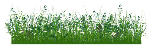 Grass. Field grass and daisies, pictured in the front projection Stock Image