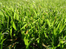 In the grass. Grass level macro shot Royalty Free Stock Photo