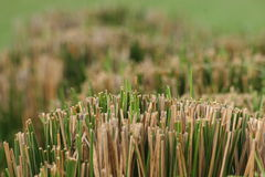 Grass. Close up of bundle of cut grass stock images