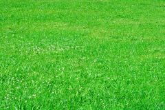 Grass. Solar lawn with a green grass royalty free stock photo