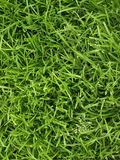 Grass. The green grass a sunny day Royalty Free Stock Photos