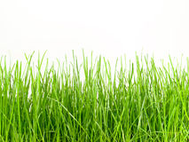 Grass. Tall isolated on white Stock Image