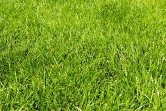 grass 免版税库存图片