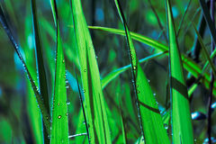 Free Grass Stock Photo - 6700910