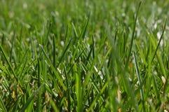 Grass. Green grass detail stock photography