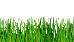 Grass. Background Illustration with the grass Royalty Free Stock Photos