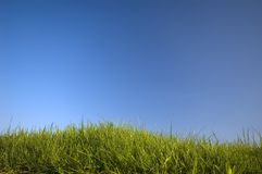 Grass. Green Grass against Blue background Royalty Free Stock Photos