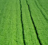 Grass. A field of grass with furrows Royalty Free Stock Photography