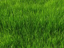 Grass. Image of green grass on meadow background stock photos