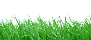 Grass. Leaves d' grass in their full vitality Stock Images