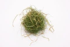 Grass Stock Photo
