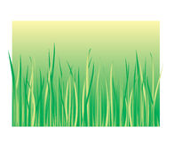 Grass. A vector illustration of green meadow with high grass Stock Illustration