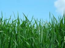 Grass. Close view of grass Stock Photos