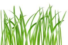 Free Grass Royalty Free Stock Photos - 7548318