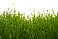 Free Grass Royalty Free Stock Images - 769169