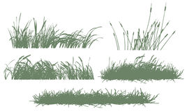 Free Grass Royalty Free Stock Photography - 7740027