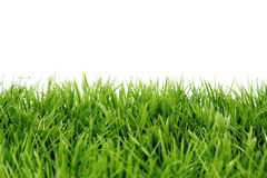 Grass. Green grass and white background royalty free stock photos