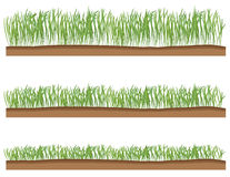 Grass. Vector illustration of grass with ground, with three stages of growth Royalty Free Stock Photos