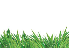Free Grass Royalty Free Stock Photography - 8255847