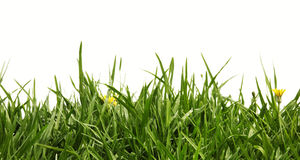 Free Grass Stock Photography - 8516442