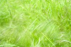 Grass. Wind swept Grass Stock Photos