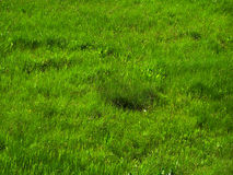 Grass. Spring grass. East Ukraine Royalty Free Stock Photos