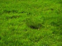 Grass. Spring grass. East Ukraine royalty free stock photos