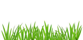 Grass Royalty Free Stock Images