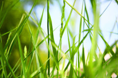 Grass Stock Photos