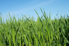 Grass. Background with the blue sky Royalty Free Stock Photos