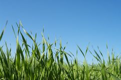 Grass. Background with the blue sky Royalty Free Stock Image