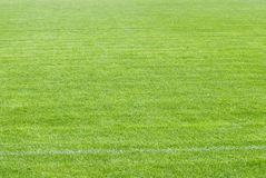 Grass. Stadium field covered with a young grass Royalty Free Stock Photo