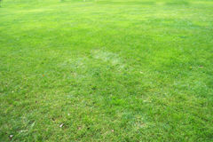 Grass. Above background green grass that grows short and dry patches are part of the field Royalty Free Stock Image
