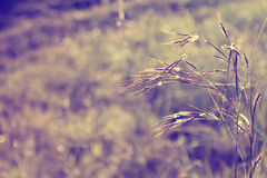 Grass abstract background Royalty Free Stock Photography