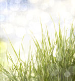 Grass with abstract background royalty free stock photo